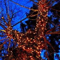 Ствол дерева  -   Предновогодний :: Евгений БРИГ и невич