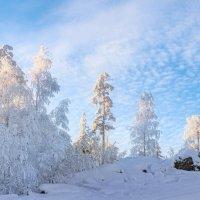 Зимняя нежность :: Vladimbormotov