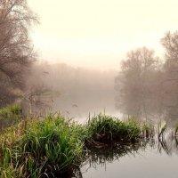 Туман опустился на реку :: Александр Бойченко