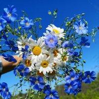 Полевые цветы. :: Надежда ***