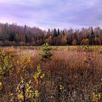 Молодой лес :: Лара Симонова