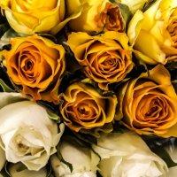 Розы :: Inga Catlaka