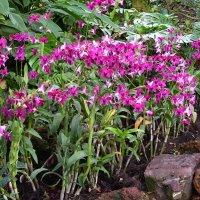 Сад орхидей в Сингапуре :: Ольга Довженко