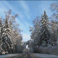 Зимняя дорога :: sm-lydmila Смородинская