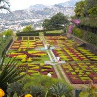 Ботанический сад в горах Мадейры :: Татьяна