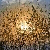 Солнце в Большом Новодевичьем пруду :: Минихан Сафин