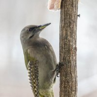крылышки в горошек :: Olga Dudina