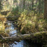 Лесной ручей :: Николай