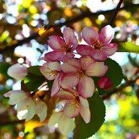 С мечтою о весне. :: Galina