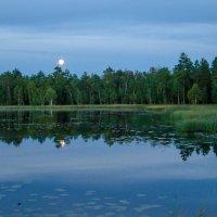 вечернее озеро :: Елена Кордумова