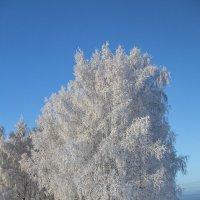 Мороз и солнце! :: Светлана Карнаух