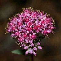 Лесной цветок :: Татьяна Мирохина