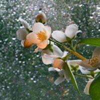 В акварели дождя :: Людмила Зайцева