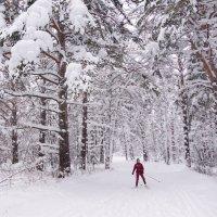 Одинокий лыжник :: Наталия Григорьева