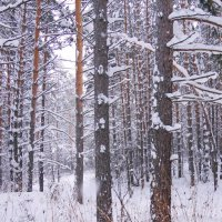 Зимний бор :: Наталия Григорьева