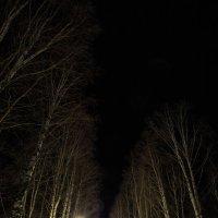 Ночь в парке на 1 января. г. Онега. :: Валентин Кузьмин
