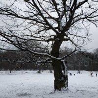 Вчерашняя зима. Уже в воспоминаниях :: Андрей Лукьянов