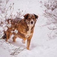 Житель зимнего парка :: Павел Крутенко