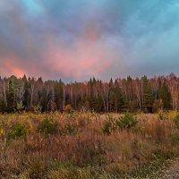 Румяный осенний закат над лесом :: Лара Симонова