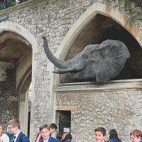 По улицам Слона водили, Как видно напоказ - Известно, что Слоны в диковинку у нас... :: Галина