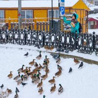 Зимующие птицы :: Олег Каплун