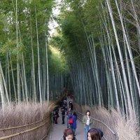 Бамбуковый лес Сагано в Киото, Япония :: Иван Литвинов