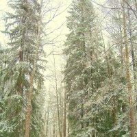 В старом парке после первого снега - 3 :: Сергей