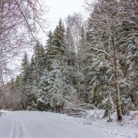 Январь :: Нина Кутина