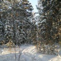 В лесу. :: ОКСАНА ЮРЬЕВНА ШВЕЦ