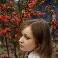 Варвара на фоне цветущего хеномелеса :: Галина Григорьева