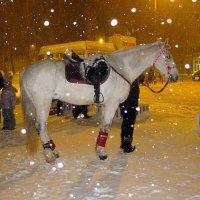 Волшебная ночь со снегопадом и белой лошадью... :: Лидия Бараблина