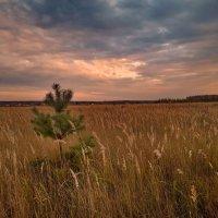 Холодное осеннее небо :: Лара Симонова