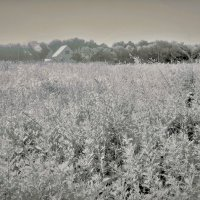 Трава по пояс :: Tanja Gerster