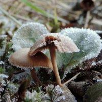 Зимние грибы :: Елена Якушина