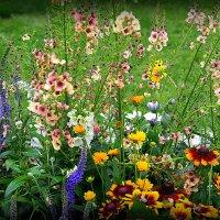 цвето-фото-терапия :: Олег Лукьянов