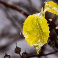 Снежный узор на листьях :: Cissa Andebo