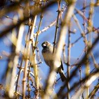 Птичка :: Глеб Дубинин