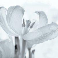 Белый танец :: Tanja Gerster