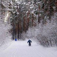 Лыжники. :: Вера Литвинова