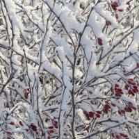 Подарок природы на Рождество - серебристый иней :: Нина северянка