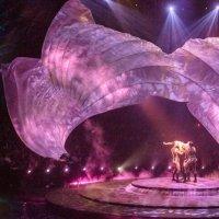 ALBUM USA :: vladimir Umrihin