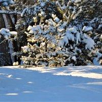 Я хочу зиму морозную, снежную и солнечную! :: Ольга Русанова (olg-rusanowa2010)