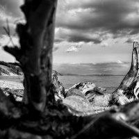 Коряга на Байкале :: Павел Крутенко