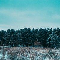 Красота зимнего леса :: Сергей Осин
