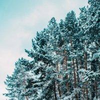 Зимний лес :: Сергей Осин