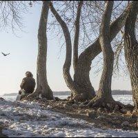 Люди не летают... :: Александр Тарноградский