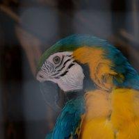 Попугай :: Глеб Дубинин
