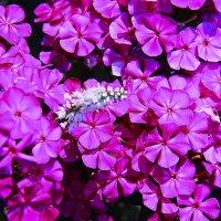 Цветы :: Штрек Надежда