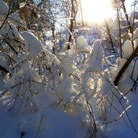 Зимняя сказка... :: Лидия Бараблина