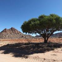 Пустыня Намиб. :: Зуев Геннадий